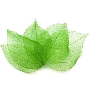Síťovaný preparovaný list 07 zelený