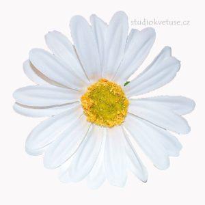 Květ kopretiny 22 bílý