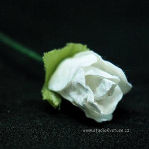 Růžička bílá 13