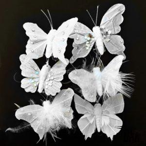 Motýlci a