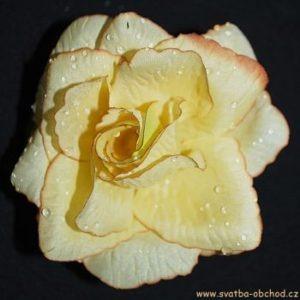 Květ růže 01 šampáň hnědý a