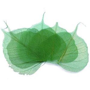 Síťovaný preparovaný list 04 zelený